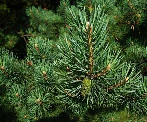 Кметът на Болярово е избран за заместник-председател на Асоциация общински гори