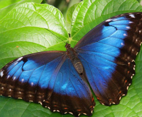 Изложба на пеперуди откриват в Бургас