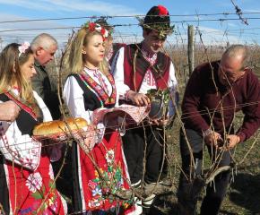 Конкурси за винари и лозари организират в Болярово за Трифоновден