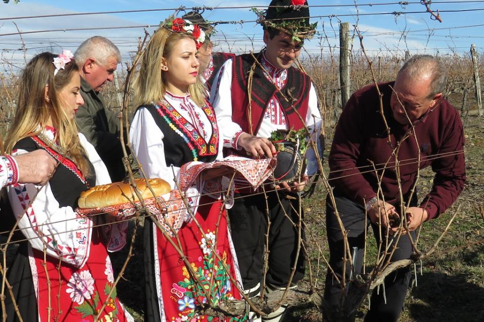 Трифон Зарезан ще посрещнат утре в боляровското село Шарково с традиционното зарязване на лозята. Общинският празник за Трифоновден ще бъде на 14 февруари...