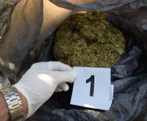Криминалната полиция в Пещера откри голямо количество марихуана