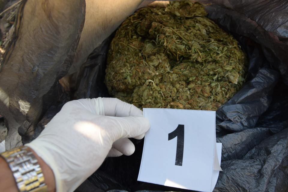 Солидно количество марихуана бе иззета от служители на група Криминална полиция при районното управление в Пещера, съобщават от ОДМВР - Пазарджик. Вчера...