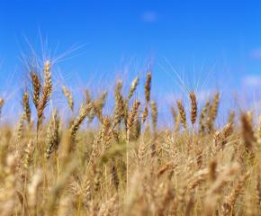 Критично ниски влагозапаси за пролетниците в някои райони