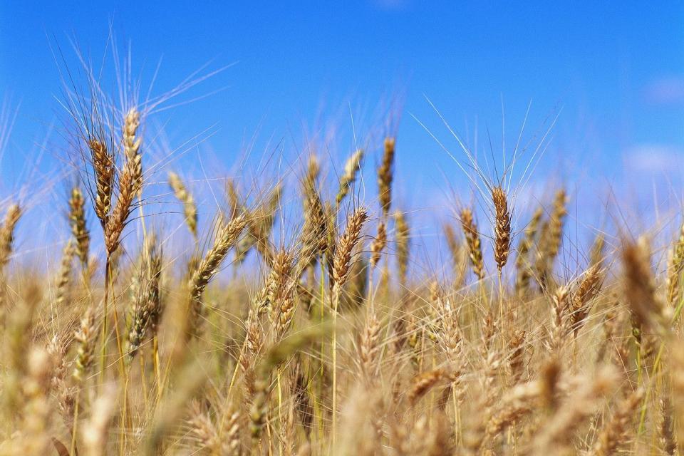 От Националния институт по метеорология и хидрология прогнозират опасна суша и през следващата седмица. Валежи от стопанско значение са паднали само на...