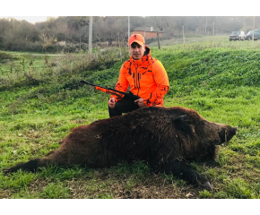 Ловците в боляровско успешно се включиха в борбата с африканската чума по свинете