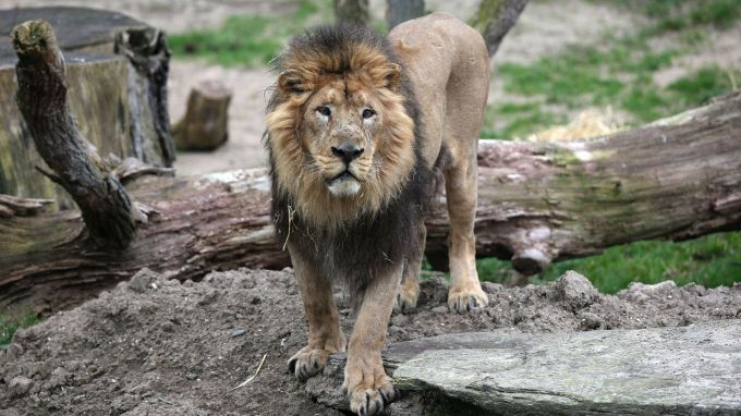 """Представители на фондация """"Четири лапи"""" посетиха пазарджишкия зоопарк, след смъртта на лъва Хектор. Няма констатирани нарушения. Любимата на пазарджиклии..."""