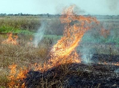 Министерство на земеделието, храните и горите (МЗХГ) сформира дежурни екипи, които ще извършват проверки при неправомерно палене на стърнища в страната....