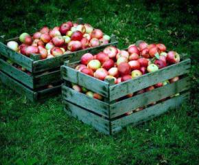 Много българи се надяват да заминат като селскостопански работници в чужбина