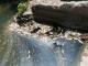 Мъртва риба изплува във водите на река Равногорска в Брацигово