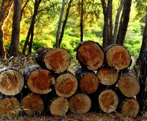 Над 10 хиляди кубика дърва осигури община Болярово за населението