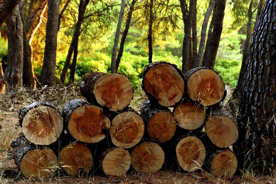 Над 10 хиляди кубика дърва осигури община Болярово за населението срещу символичната цена от 23 лева. С дърва за огрев от общинския горски фонд са снабдени...