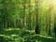 Над 300 дка нови гори е създала община Болярово
