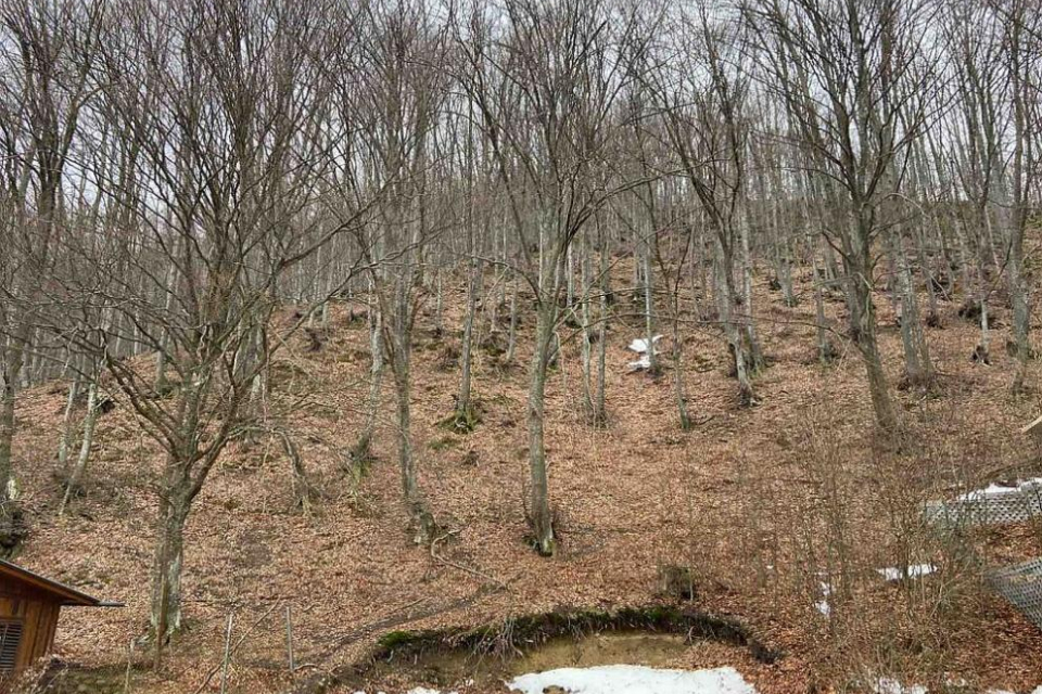 Намериха телата на двамата старозагорци, изчезнали под връх Ботев. Бащата и синът са открити от дългогодишния спасител Тодор Мечкарев от Калофер. Телата...