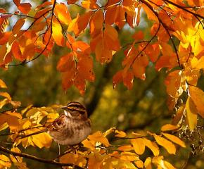 Най-доброто от есента - топло и слънчево и през новата седмица