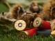 Неизвестен стреля по домашни животни