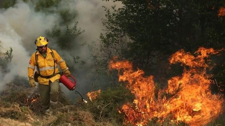 Експерти от Югоизточно държавно предприятие съвместно с представители на Пожарна безопасност и защита на населението и регионалните дирекции по горите...