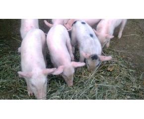 Нови изисквания за отглеждането на животни в личните дворове