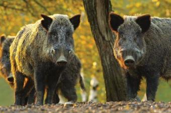 Парламентът прие окончателно промени в Закона за лова и опазването на дивеча, свързани...