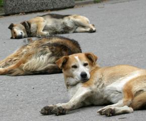 Обществено обсъждане на проект за бездомните кучета на територията на община Сливен