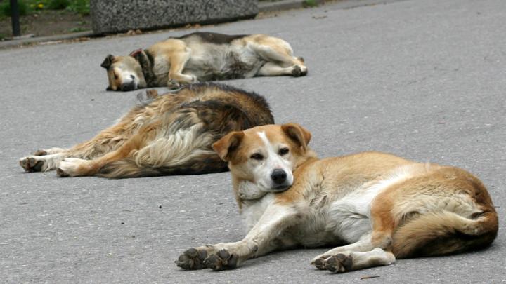 Община Сливен инициираобществено обсъждане на проектна Програма и план за действие за овладяване популацията на безстопанствените кучета на територията...