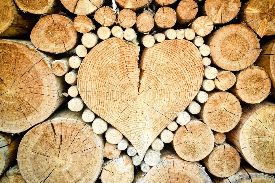 Община Болярово и тази година ще отпусне по 8 кубика дърва безплатно за лекарите и стоматолозите, които работатят на територията й и обслужват местното...