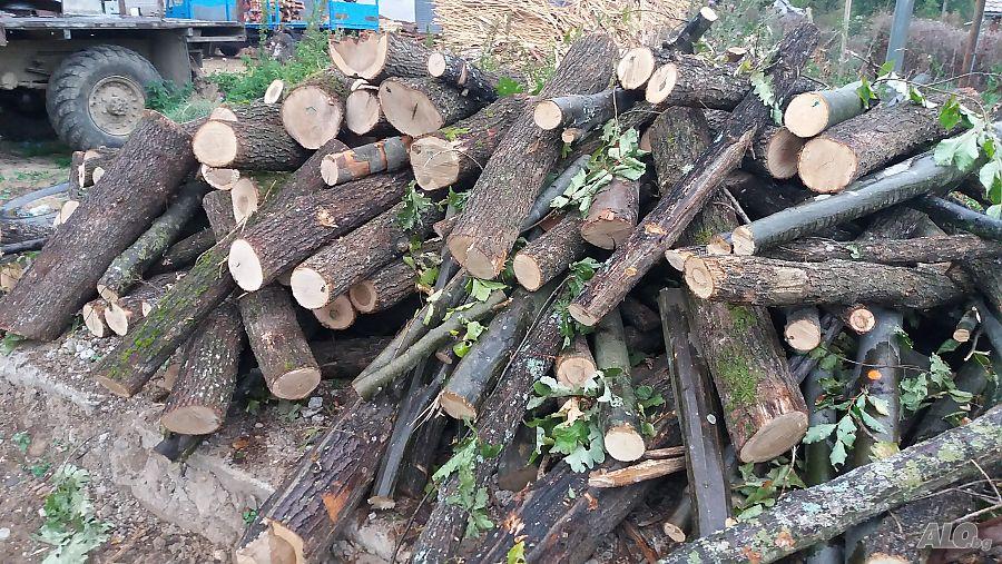 И тази година Община Сливен инициира дейности по подпомагане на хора с увреждания и предоставяне на дърва за огрев за зимния период 2021-2022 година. Определените...