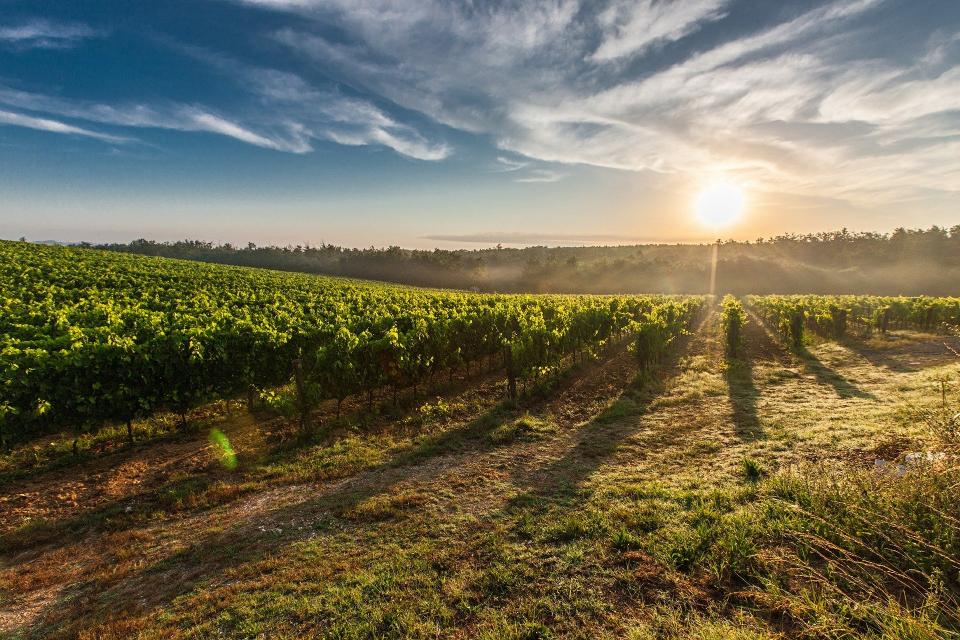 Община Сливен получи покана за партньорство в проект WINET - Търговия и иновации в лозаро-винарската индустрия, BSB – 638 на Търговско-промишлена палата...