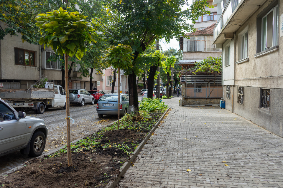 """Започна засаждането на повече от сто нови дървета в обособени места в Ямбол, сред които ул. """"Дружба"""", ул. """"Жорж Папазов"""", ул. """"Емине"""", Градски парк, жилищен..."""