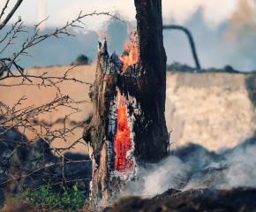 От общината в Твърдица търсят информация за причината за горския пожар