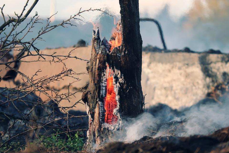 От община Твърдица призоваха всеки, който има информация за причината за големия пожар в борова гора край града, да се свърже с администрацията. Издирват...