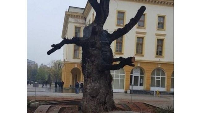 Общо 1746 души са гласували до момента в анкета за съдбата на Стария бряст в Сливен, която започна в началото на ноември. Това съобщиха от общинския пресцентър....