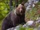 Обсъждат мерки срещу бракониерството в смолянско