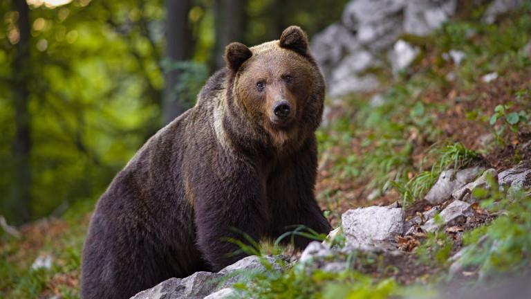 Директори на институциите в Смолян, имащи отношение към опазване живота и здравето на животните, се събират на работна среща, за да обсъдят засилване на...