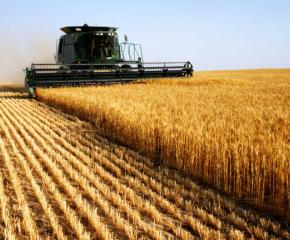 Очакват около 40% по-ниски добиви на пшеница в Добруджа