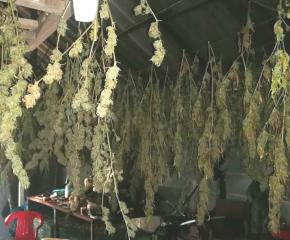 ОДМВР – Ямбол иззеха голямо количество наркотици от частен имот в село Ханово