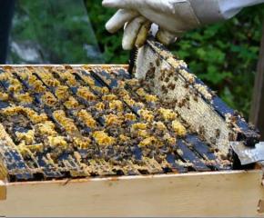 Ограничава се употребата на продукти за растителна защита, с цел опазване на пчелните семейства