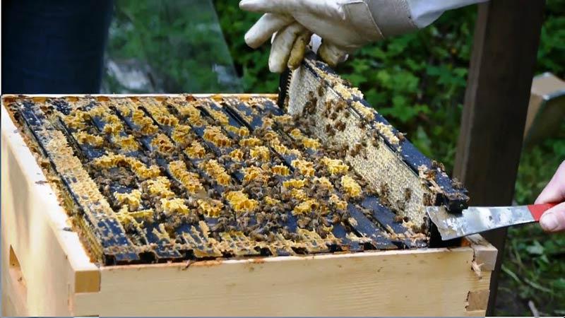 Ограничава се употребата на Продукти за растителна защита (ПРЗ), с цел опазване на пчелните семейства. Промените целят въвеждане на по-рестриктивни часови...