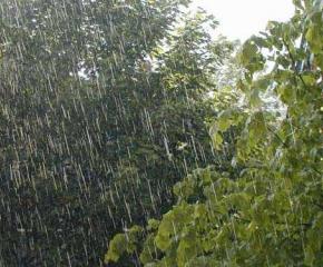 Около 50 литра дъжд на квадратен метър се е излял над Странджа