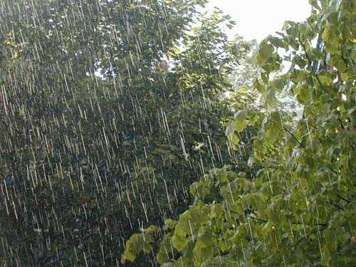 Падналите в Ямболска област валежи от началото на месеца до днес на места доближават месечната норма за региона, която е 60 литра на кв. метър, съобщи...