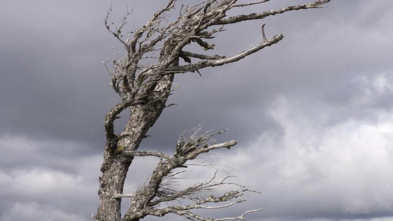 Жълт код за силен вятър е обявен за днес в цялата страна, съобщиха от НИМХ.Преди обяд в Северна България, а след обяд и в Южна северозападният вятър ще...