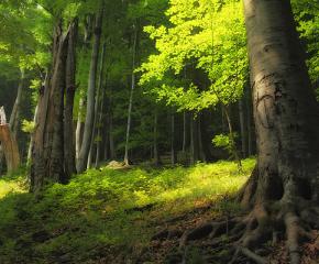 Организират проверка на старите гори у нас