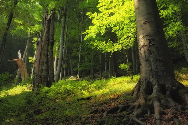 Агенцията по горите съвместно с природозащитната организация Световен фонд за дивата природа - България (WWF) организира проверка на състоянието на старите...