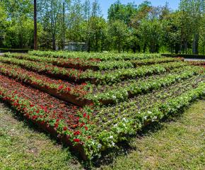 Още 43 000 цветя разкрасяват Ямбол