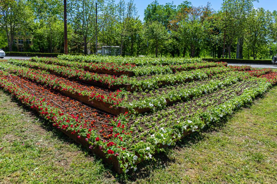 """Озеленяването на Ямбол продължава с бързи темпове и градът придобива все цветен и приятен празничен облик. Служителите на Общинско предприятие """"Паркове..."""