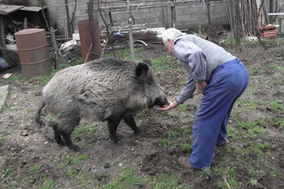 Две положителни проби на африканска чума по диви свине са регисистрирани в Кюстендилско, каза тази сутрин за Националното радио областният управител Виктор...