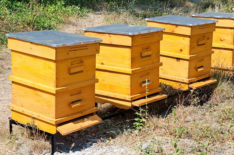 Откриха най-пасната болест по пчелите - американски гнилец във Врачанско.Новината...