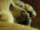 Откриха препариран лъв в хале на разградска фирма