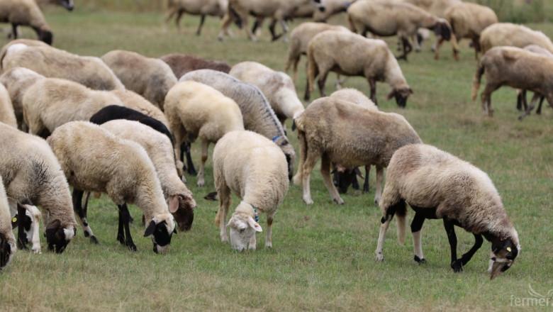 Повече от хиляда чистопородни животни, фермерски демонстрации, фолклорни и кулинарни кътове ще бъдат показани на Националния събор на овцевъдите, който...
