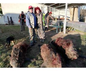 Отстреляха 16 глигана за 2 дни в боляровско