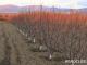 Овощарите могат да заявят помощ за зимните пръскания